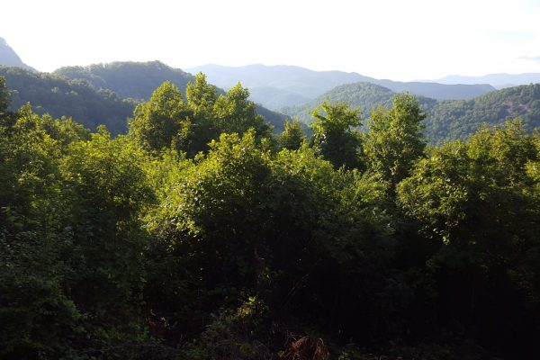 Blue Ridge property (115)