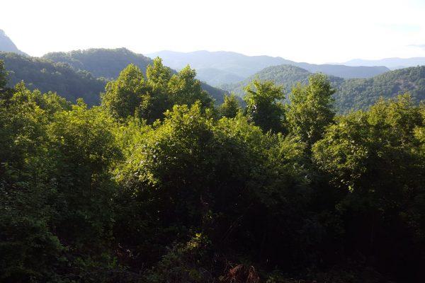 Blue Ridge property (115)