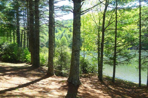 Blue Ridge property (35)