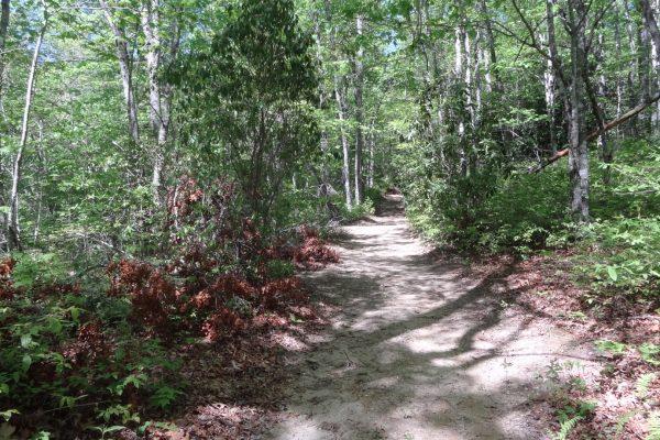 Blue Ridge property (67)
