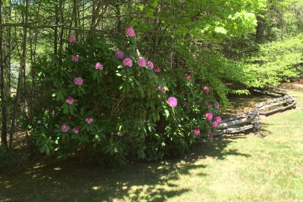 Blue Ridge property (71)
